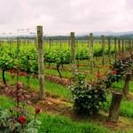 Yarra Valley, cu ale sale vinării